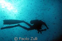 mitico alì by Paolo Zulli