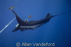 Fly Bye. Manta passing below the stern line of Solmar V. ... by Allan Vandeford