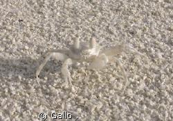 I'm invisible by Gallo .
