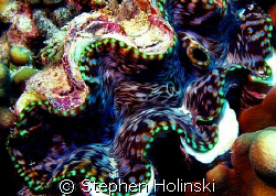 Great Barrier Reef, Giant Clam. by Stephen Holinski