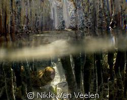 Snowflake eel amongst the mangrove shoots. Taken in Nabq ... by Nikki Van Veelen