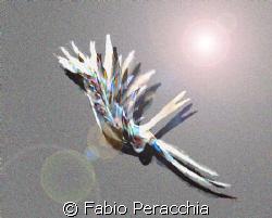 Disegno a mano libera by Fabio Peracchia