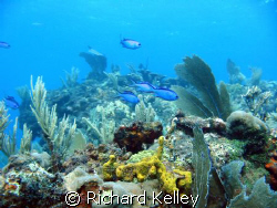I took this with a cannon A40 in a underwater case with c... by Richard Kelley