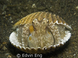 Home Sweet Home! Taken in Lembeh with Ganon G9. by Edvin Eng