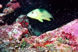 Paradise Reef, Cozumel, Mexico.  Nokonos V with strobe. T... by Mordechai Saxon