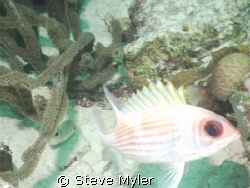 I really like the Squirrelfish but mywife says that his e... by Steve Myler