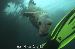 Fun Luvin Seal by Mike Clark