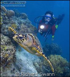 Hawksbill Turtle, Sabah Borneo, D2x 12-24 lens F8 1/200th by Richard Swann