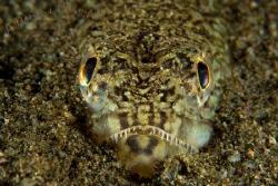 I found this full frame little guy hiding in the dark bro... by Dennis Champ