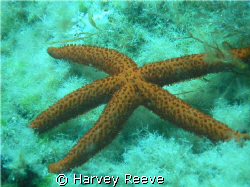 STARFISH by Harvey Reeve