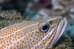 Fish Close up by Michael Wicks