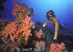 snorkeller and soft corals by Geoff Spiby
