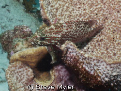 Scorpionfish-can you see me??  Larry's Lair, Bonaire by Steve Myler