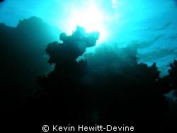 Marsa Alarm 2008 - Coolpix 5400 by Kevin Hewitt-Devine