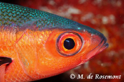 Close shot during a night dive. Maybe, someone could give... by Moeava De Rosemont