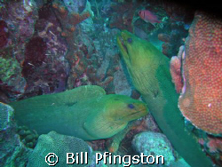 Parents-saw a baby eel swimming close to them by Bill Pfingston