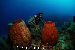 Diver with sponges by Armando Gasse