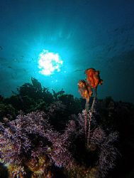 Ascidians, Clovelly by Doug Anderson