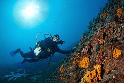 Underwater Scene from Halkidiki #1# by Nicholas Samaras