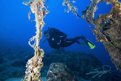 Underwater Scene from Halkidiki #2# by Nicholas Samaras