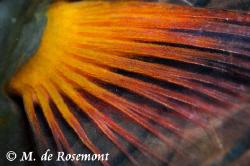 Close up!! D50/105mm 1 strobe (Borabora) by Moeava De Rosemont