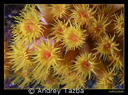 Sea flowers. by Andrey Tazba