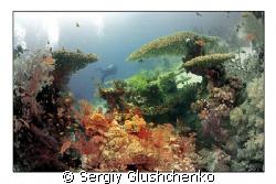 Underwater World by Sergiy Glushchenko
