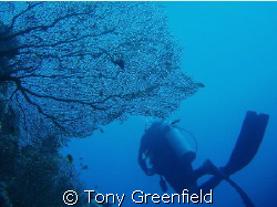 A sea fan at Ras Nasrani, taken with Olympus Mu500 using ... by Tony Greenfield
