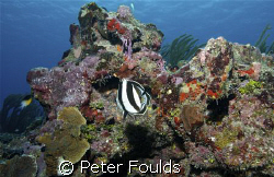 A Reef alive and well. East End , Grand cayman. Nikon D200  by Peter Foulds