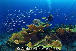 Underwater pastoral by Aleksandr Marinicev
