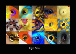 Second in the serie of Eye sea. by Dray Van Beeck