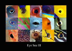 Eye sea III by Dray Van Beeck