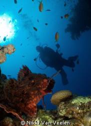 "Scorpionfish going in for the ""kill"" taken at Marsa Barei... by Nikki Van Veelen"