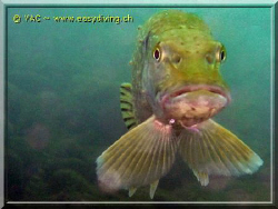 """face to face withe the """"Brochet"""" by Yannick Abel-Coindoz"""