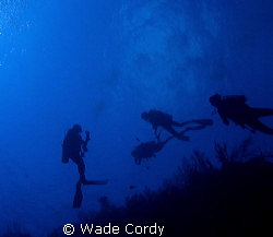 The Deep Blue, Belize, macro by Wade Cordy