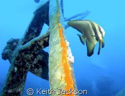 Bat fish on the Thistlegorm by Keith Jackson