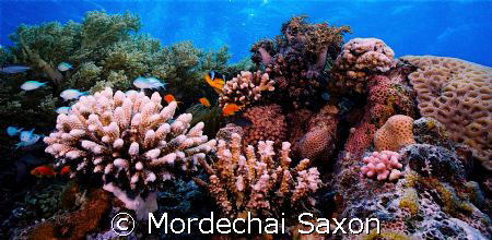 Protected Reef, Eilat, Israel. by Mordechai Saxon