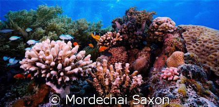 Protected Reef, Eilat, Israel. by Mordechai Saxon