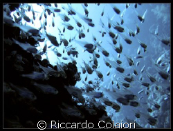 Glass Fishes at JackFish Alley