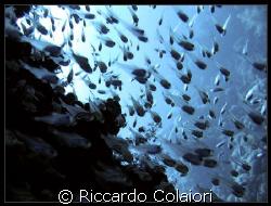 Glass Fishes at JackFish Alley Sharm el Sheik, Ras Moham... by Riccardo Colaiori