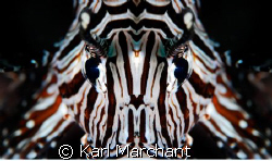 lionfish macro-mirror by Karl Marchant