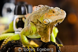 Say hi to our diveshop pet! by Soren Egeberg
