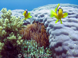 My Two little friends at Islands Dahab..... by Brett Hadden