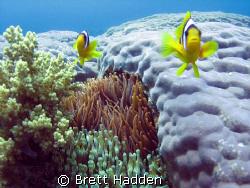 My Two little friends at Islands Dahab..... by Brett Hadden