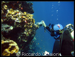 The Underwater Photographer.