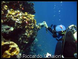 The Underwater Photographer. Sharm el Sheik, Ras Mohamme... by Riccardo Colaiori