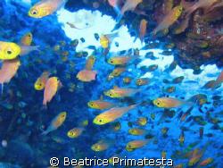 Glass fishes by Beatrice Primatesta