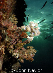 late afternoon on reef wall by John Naylor