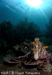 imagine...a soft coral bouquette on the dinner table...ju... by Teguh Tirtaputra