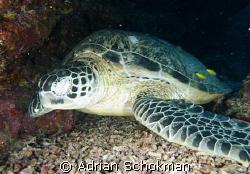 Taking a Break.... Taken at Sipadan Island. Olympus E-330 by Adrian Schokman